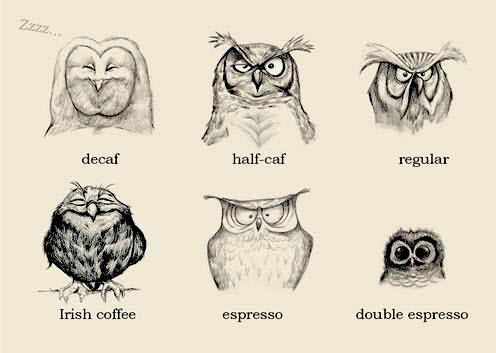 Owls and their Coffee Faces